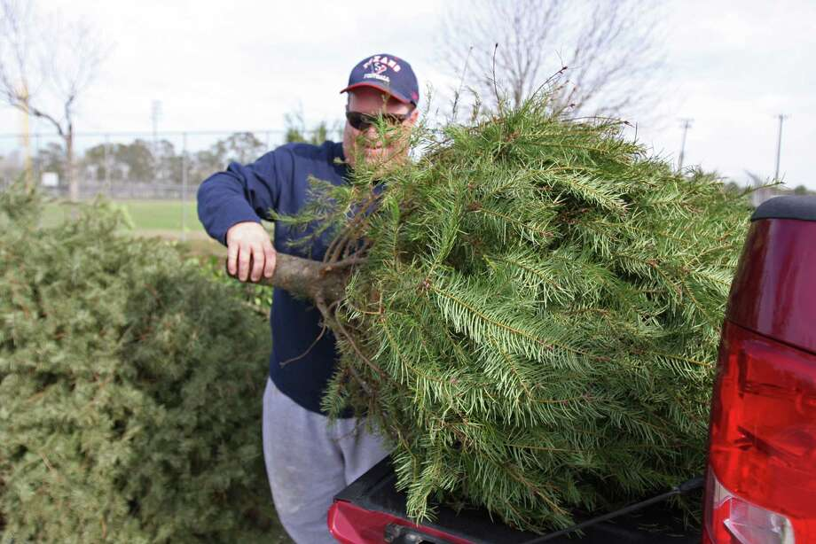 Christmas trees can be recycled at parks - Houston Chronicle