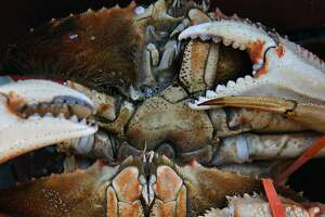 Crab warning lifted: Locally caught Dungeness is declared safe - Photo