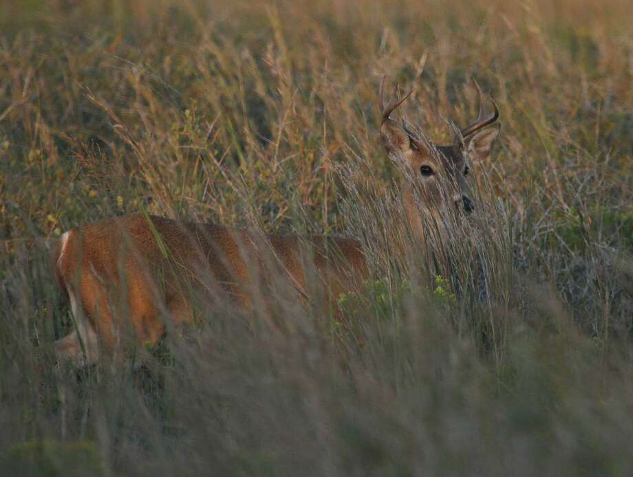 Flooding of the river basins was just one of the many weather-related challenges that left large swaths of East Texas inaccessible to the state's 700,000 deer hunters. All of it amounted to a frustrating 2015-16 season for whitetail hunters. Photo: Picasa