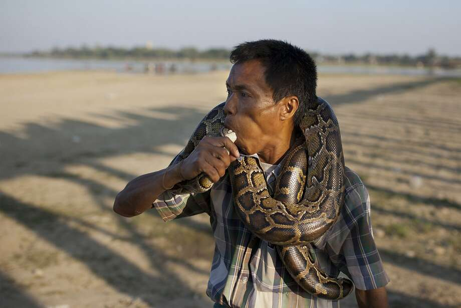 A snake charmer places a tame-python's head into his mouth to attract tourists close to the historic U Bein Bridge in Amarapura, Mandalay, Myanmar, Saturday, Jan. 2, 2016. Tourists to Myanmar is expected to exceed 4.5 million in 2015. Photo: Hkun Lat, Associated Press