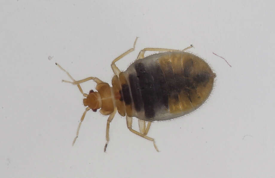 A California couple's vacation in Manhattan was ruined when they discovered bed bugs in their hotel room. Photo: David Cooper / TORONTO STAR