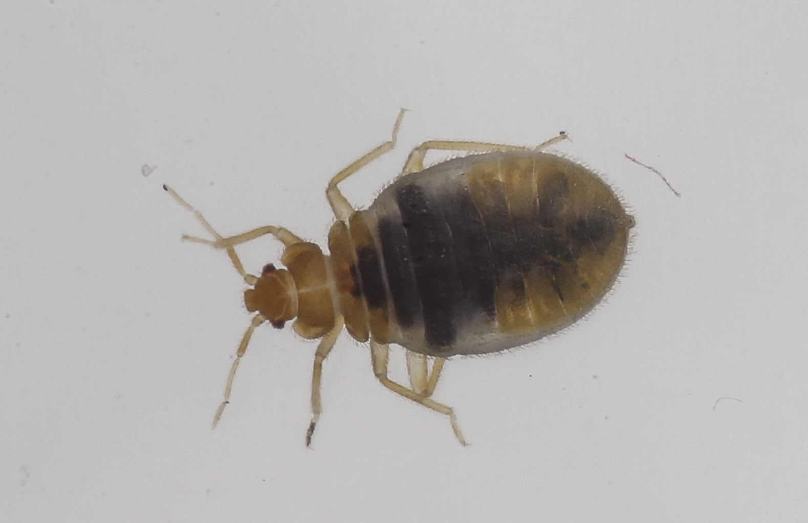 Bed Bugs In New York Hotel Video