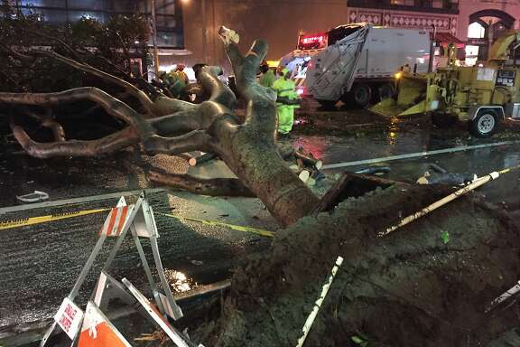 A large tree toppled over between Fourth and Fifth streets on Mission Street in San Francisco amid Wednesday morning's rainstorm.