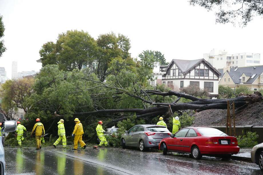 Recreation and Park Department workers remove a black acacia tree that fell on Washington Street and onto three cars on Wednesday, January 6, 2015 in San Francisco, Calif. Photo: Lea Suzuki, The Chronicle