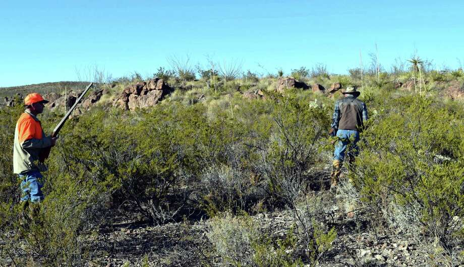 Mark Seaman (left) and Alex Hamilton of the Sportsman Club of San Antonio bust through the West Texas brush near Marfa during a late season hunt where huge coveys of blue quail provided ample shooting opportunities. Photo: Ralph Winingham / For The Express-News