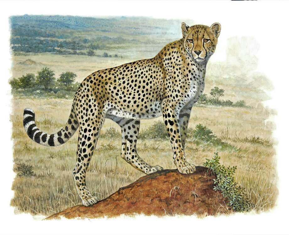 Robert Dallet Cheetah Watercolor and gouache Photo: Studio Des Fleurs © Hermès, 2015