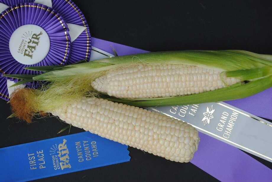 'Tuxana,' an open-pollinated sweet corn variety. Photo: Www.siskiyouseeds.com