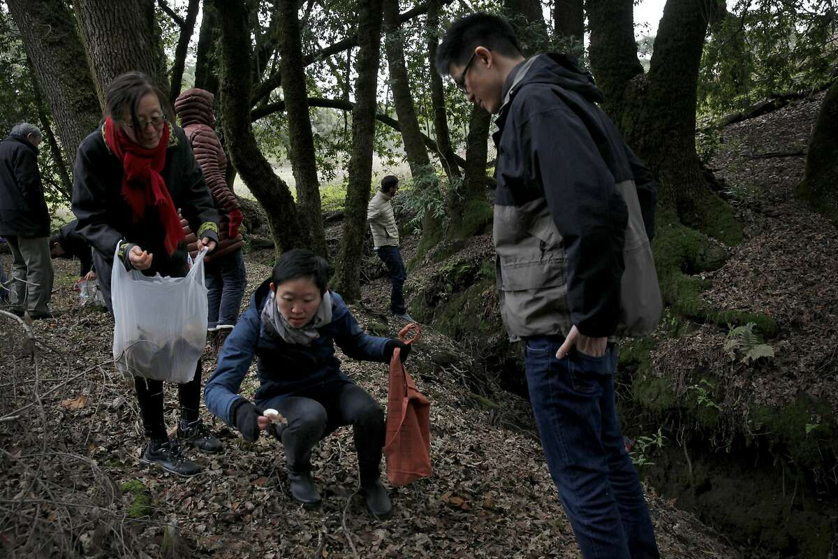Participants in a wild mushroom foray, including Nicole Lew (center with mushroom) search for mushrooms near Healdsburg, Calif., on Sunday, December 27, 2015.