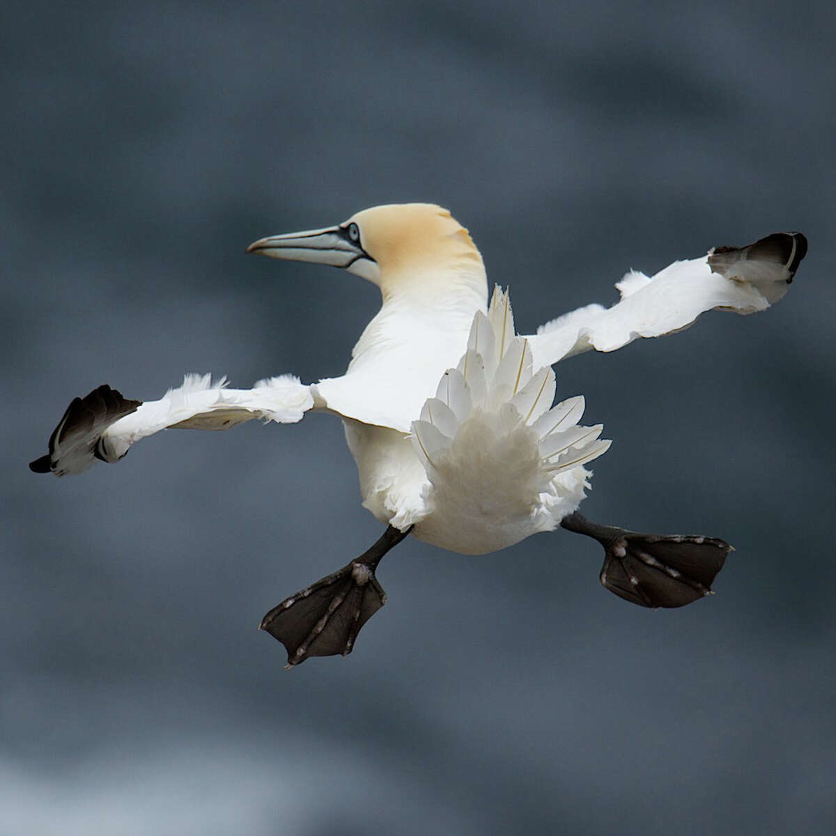 """""""Look Ma, I can fly!"""" Highly Commended - Charlie Davidson"""