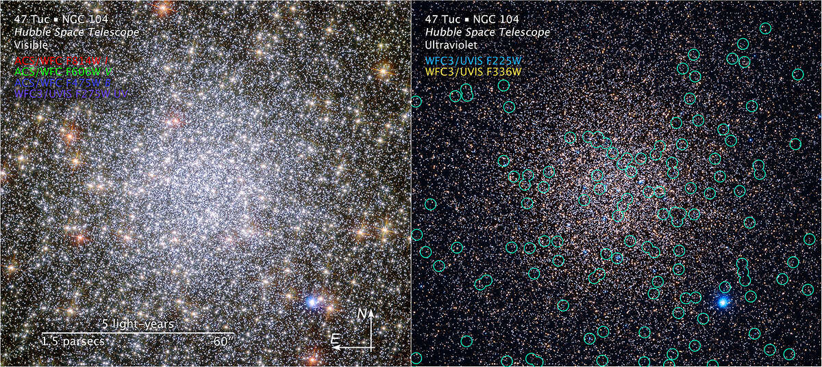 The dense collection of stars in this image is a globular cluster known as NGC 104 - or, more commonly, 47 Tucanae, since it is part of the constellation of Tucana (The Toucan) in the southern sky. At a distance of 17 000 light-years 47 Tucanae resides within our home galaxy, the Milky Way. After Omega Centauri it is the brightest globular cluster in the night sky, hosting tens of thousands of stars. With a diameter of 120 light-years the cluster appears in the night sky as the same size as the full Moon. Stars in globular clusters are typically born at the same time from the same cloud of material and can be thought of as gigantic stellar families. These families have some internal segregation, in which the most massive stars tend to be packed close to the centre of the cluster, while stars with lower mass are preferentially found on the fringes of the cluster. The knowledge that all the family members are at the same distance and of the same age makes globular clusters a superb laboratory for astronomers studying the evolution and interaction of stars. The French astronomer Nicolas Louis de Lacaille first discovered 47 Tucanae in 1751. Now, the NASA/ESA Hubble Space Telescope is able to resolve the individual components of the cluster in stunning detail. From X-ray sources to neutron stars, 47 Tucanae seems to host a zoo of exotic objects. Despite detailed observation, not a single planet has yet been found in the cluster. The population of planets within 47 Tucanae seems to be much lower than in the solar neighbourhood. It seems that the densely populated environment of the globular cluster is not the cause of this lack of planets, as none were found in the less packed outskirts of the cluster. Maybe the fact that the cluster contains almost nothing but hydrogen and helium, and no heavier elements, is to blame.