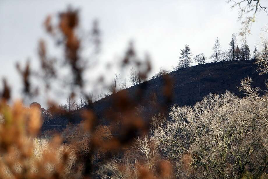 A charred hillside in Middletown, Calif., on Thursday, January 7, 2016. Photo: Scott Strazzante, The Chronicle