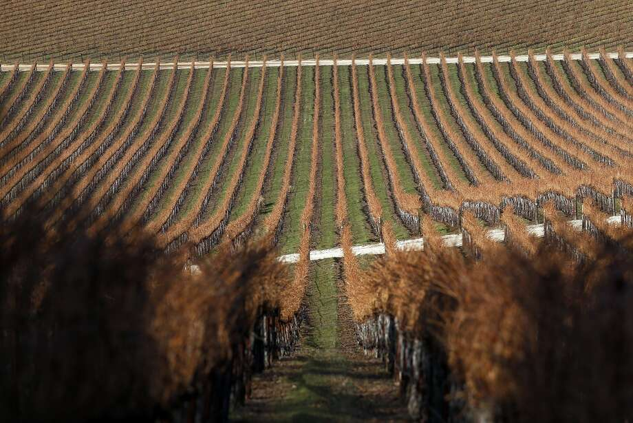 Amber Knolls Vineyard in Lake County. Photo: Scott Strazzante, The Chronicle