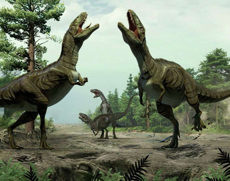 This illustration provided by Lida Xing and Yujiang Han in January 2016 shows theropods engaged in scrape ceremony display activity, based on trace fossil evidence from Colorado. The scientists who discovered the long grooves say they were dug by the feet of dinosaurs during a frenzied ritual to attract mates. Such behavior is seen nowadays in some birds, and the discovery suggests that two-legged, meat-eating dinosaurs called theropods did it about 100 million years ago, the researchers said in a report released Thursday, Jan. 7, 2016. Photo: Lida Xing, AP / Lida Xing, Yujiang Han