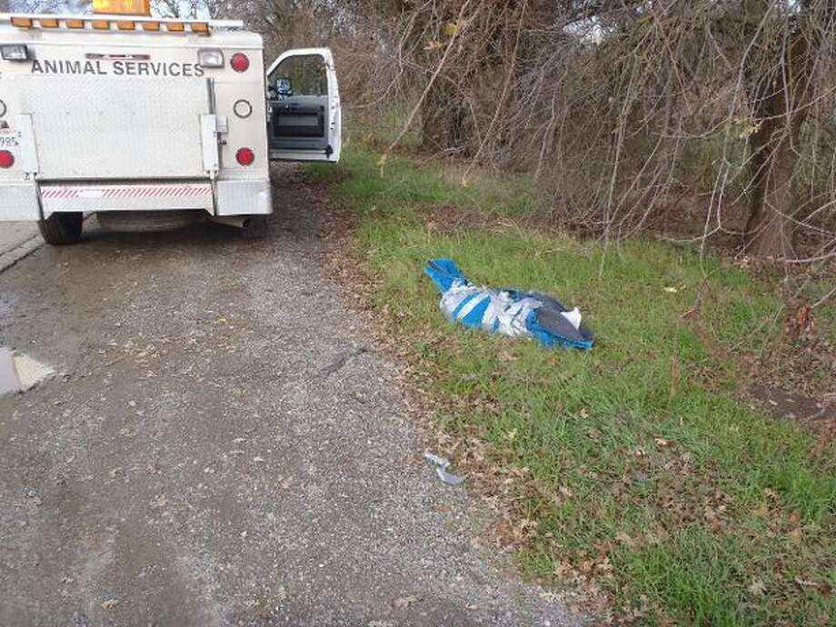 The body of a dog was discovered on the side of the road near the northbound I-5 on-ramp in Woodland, wrapped up in a carpet, on Jan. 8, 2016, officials said. Photo: Yolo County Sheriff's Office Animal Services