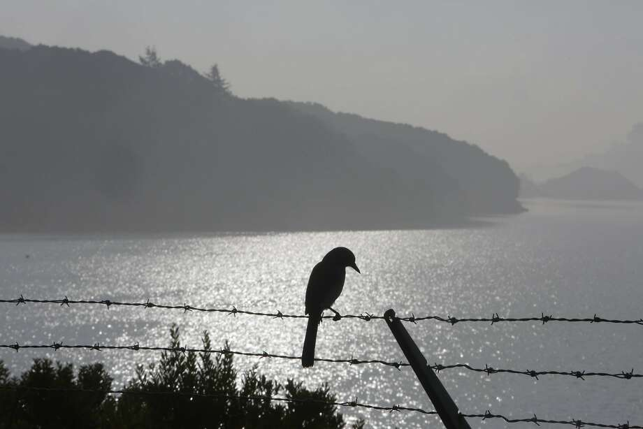 A bird is silhouetted against the water in Crystal Springs Reservoir on Tuesday, Jan. 12, 2016. Photo: Lea Suzuki, The Chronicle