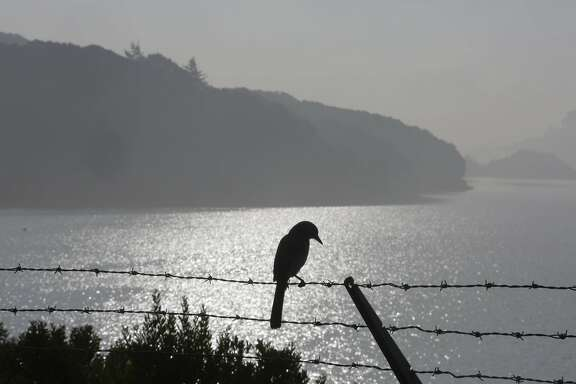 A bird is silhouetted against the water in  Crystal Springs Reservoir on Tuesday, January 12, 2015.