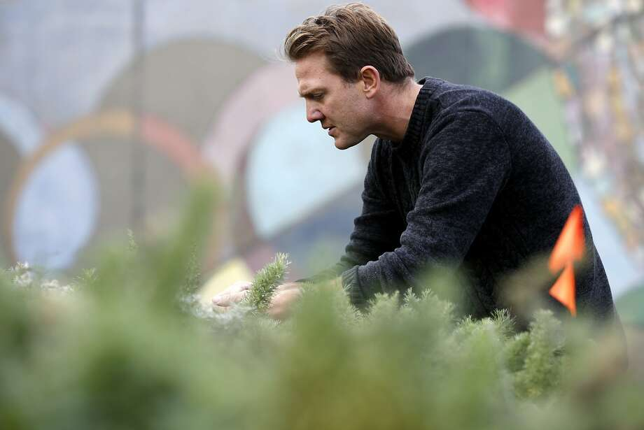Patrick Marley Rump, executive director, weeds some plants at Candlestick Point Native Plant Nursery in San Francisco, California, on Tuesday, Jan. 12, 2016. Photo: Connor Radnovich, The Chronicle