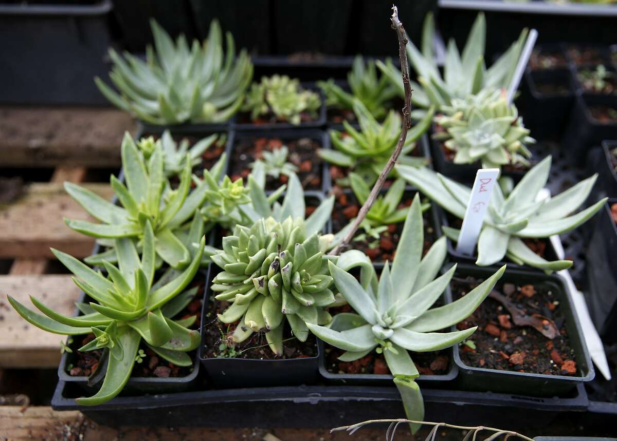 Succulents at Candlestick Point Native Plant Nursery in San Francisco, California, on Tuesday, Jan. 12, 2016.