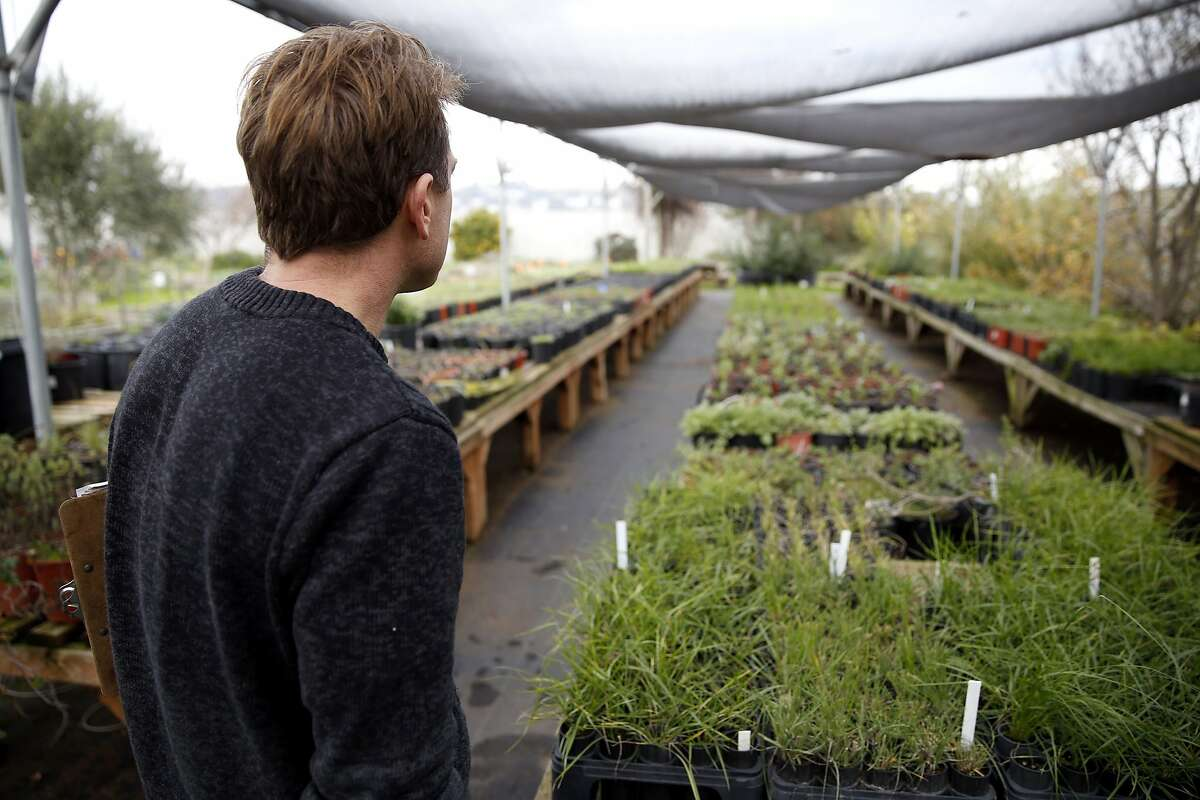 Patrick Marley Rump, executive director, looks over his plants at Candlestick Point Native Plant Nursery in San Francisco, California, on Tuesday, Jan. 12, 2016.