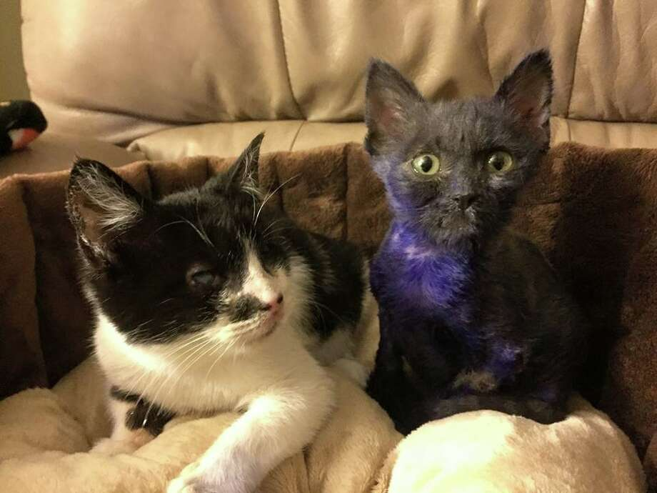 This picture shows Wanda (L) and Smurf (R) as they prepare to go into foster care.