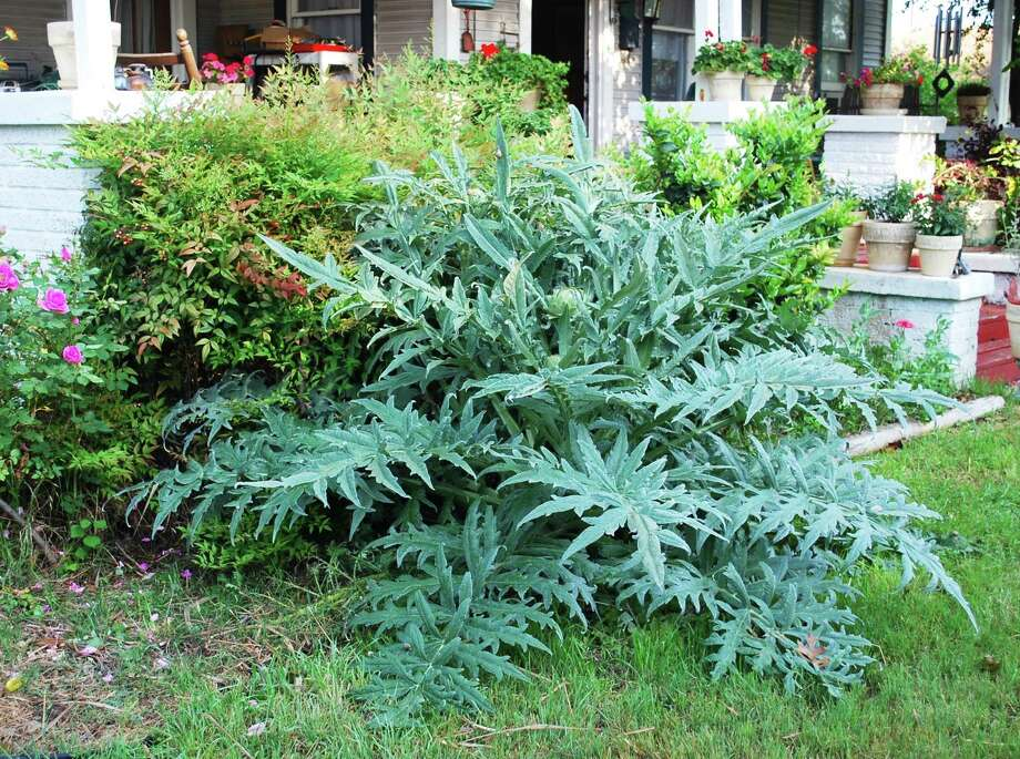 Edible Plants Add Beauty And Tastiness To Gardens