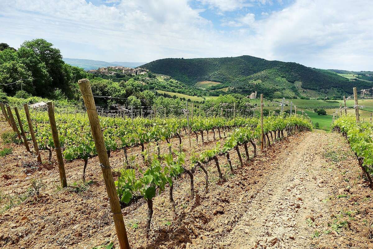 The countryside around Montalcino is dotted with vibrant vineyards that seem to roll to infinity.