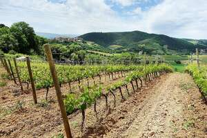 Explore Tuscany's world-class wines - Photo