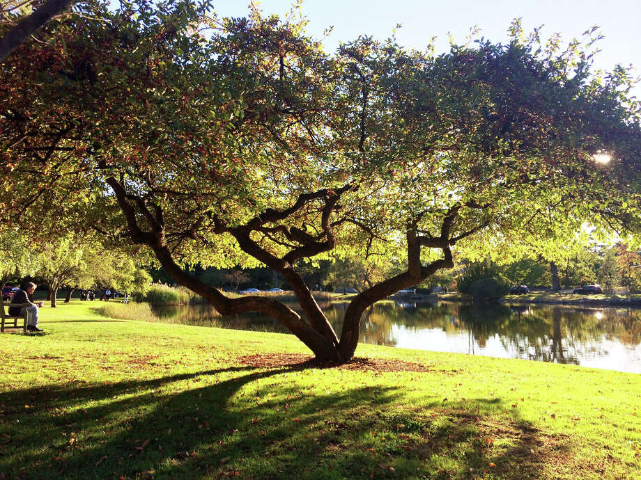 A photo of a Bruce Park tree taken by Jan Mrozek for the Greenwich Tree Conservancy's Awesome Tree Contest in 2014. Photo: Jan Mrozek / Contributed Photo / Greenwich Time Contributed