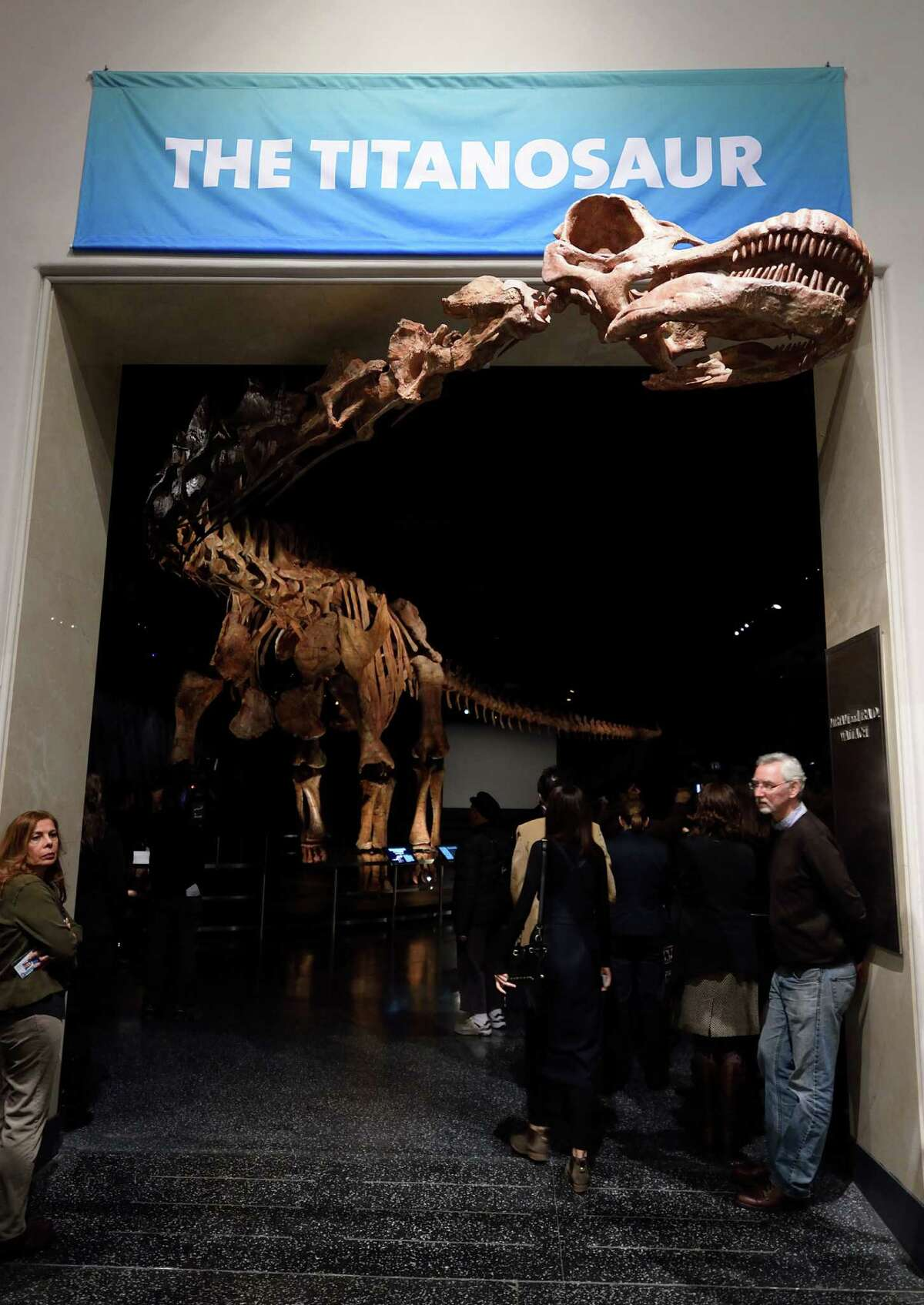 The Titanosaur, the largest dinosaur ever displayed at the American Museum of Natural History, is unveiled at a news conference January 14, 2016 in New York. The dinosaur was discovered in 2014, in Argentina's Patagonia region.