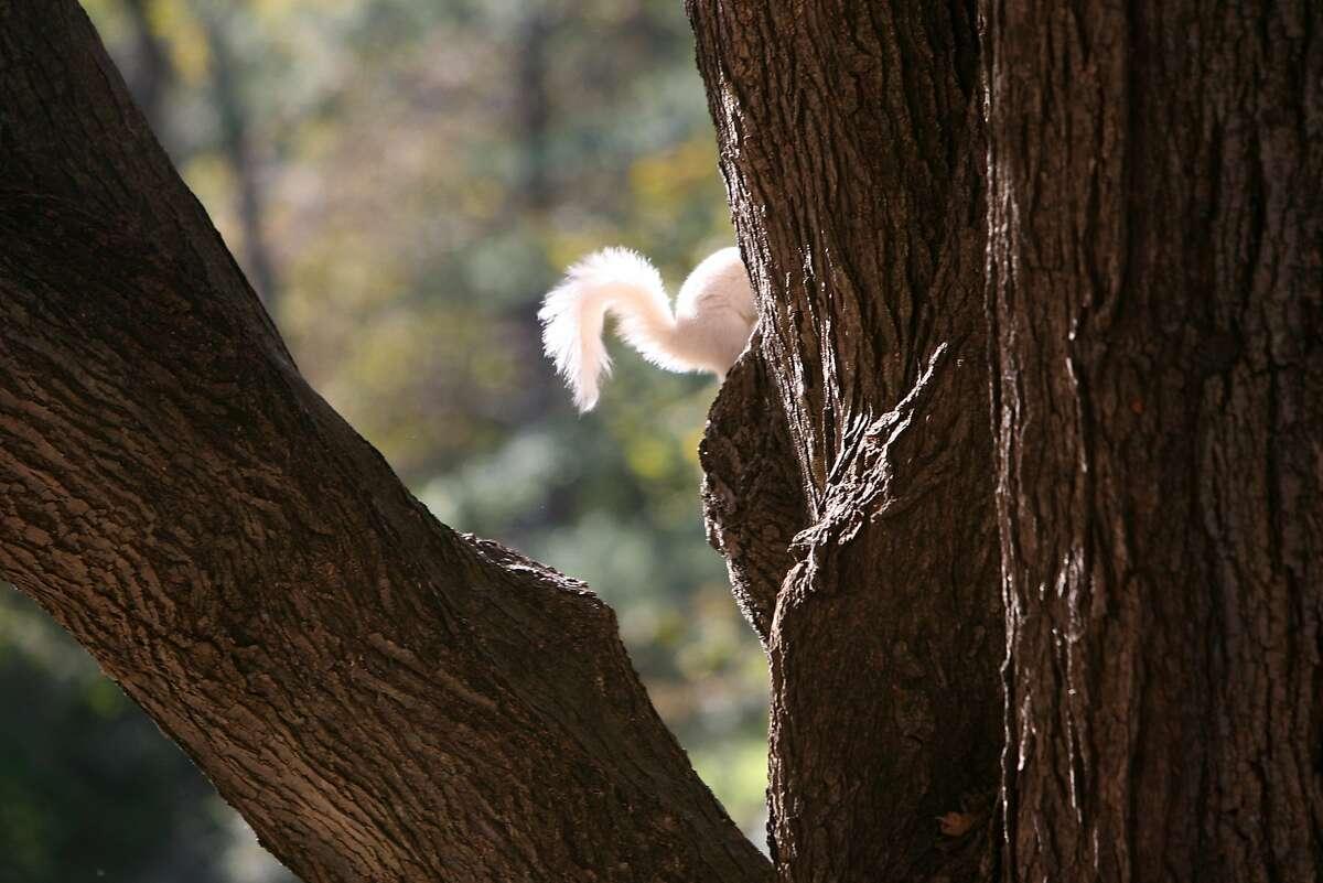 Squirrels occasionally come in white.