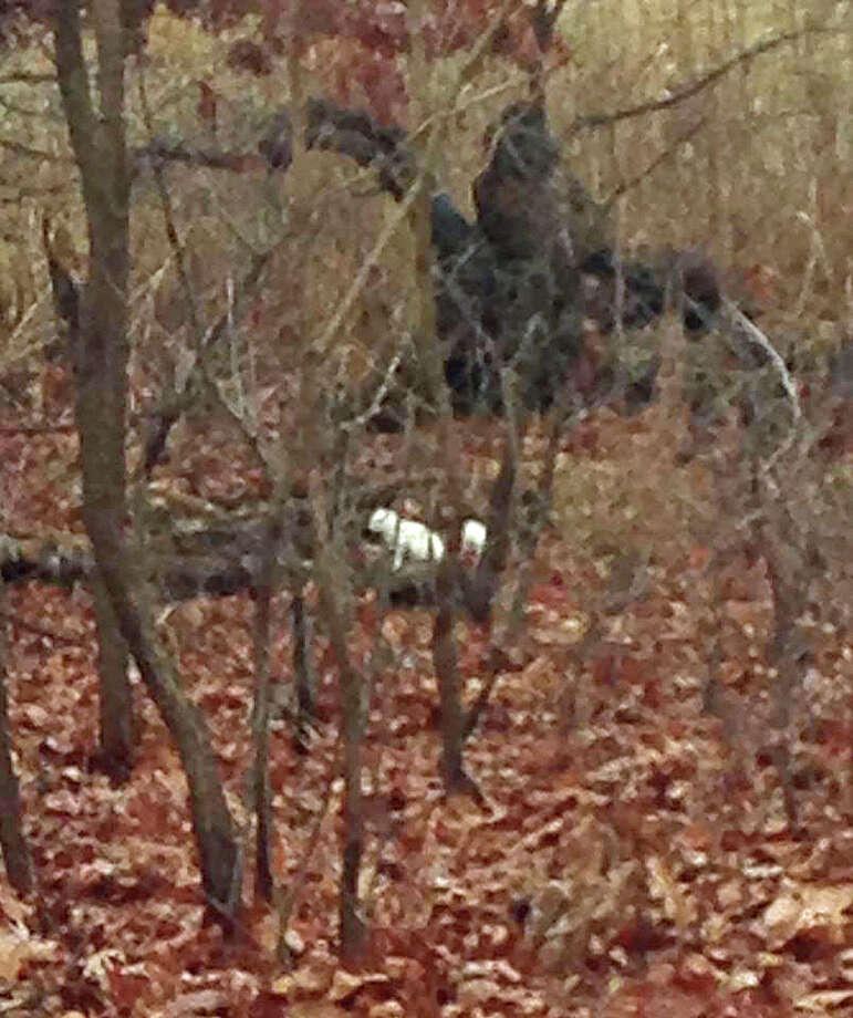 The state Department of Energy and Environmental Protection posted on its Facebook page a photo shared by Roger D'Agostin of the distinctively white squirrel surrounded by a brown, snowless, landscape at Sherwood Island State Park in Westport. Photo: /