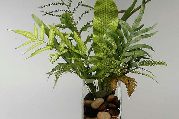 A class on ferns suitable for shade and sun will be held March 2 at University Baptist Church.