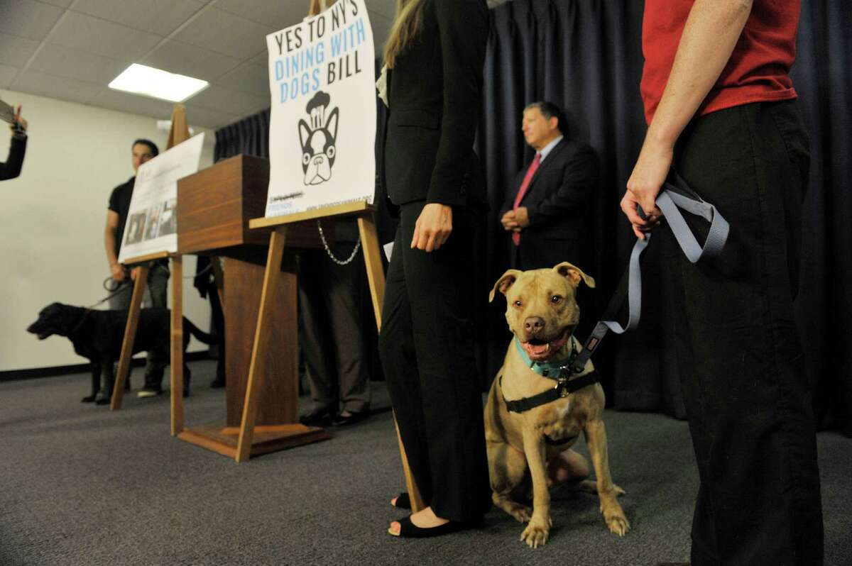 Diggy stands next to his owner, Alyssa Bazan with the Mohawk Hudson Humane Society during a press conference by legislators and organizations that are in favor of the Dining with Dogs bill, on Tuesday, May 19, 2015, in Albany, N.Y. (Paul Buckowski / Times Union)