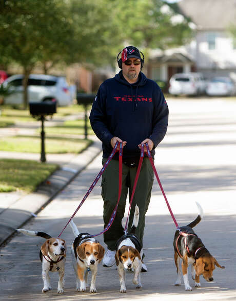 Keith Westaway walks his Beagles Tuesday along Redbud Berry Way in Cypress. Westaway said the four, Smith, Wesson, Mario and Andre are all rescue dogs. Mario and Andre are named after former Houston Texans.  Photo: Cody Duty, Staff / © 2015 Houston Chronicle