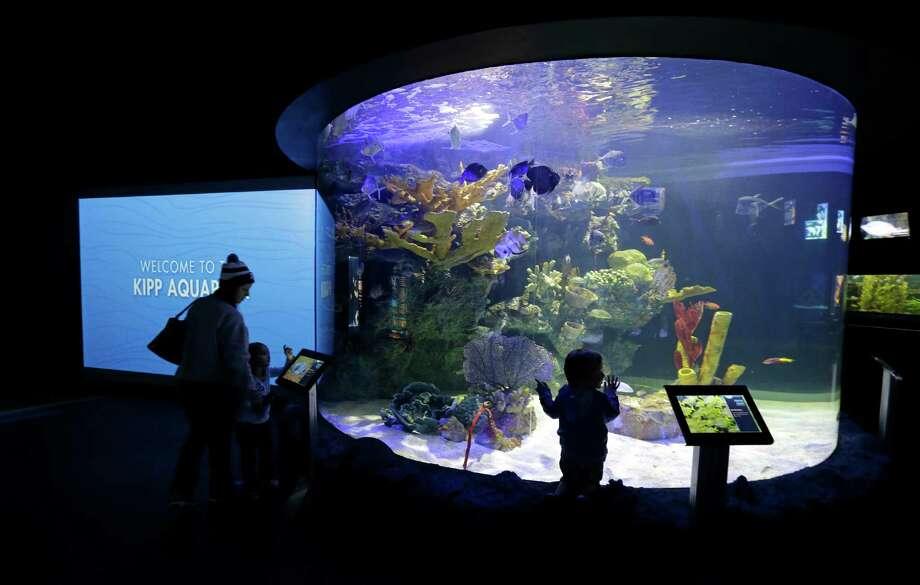 Houston Zoo Shows Off Newly Remodeled Aquarium Houston