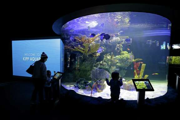 People look at the newly remodeled Kipp Aquarium at the Houston Zoo, 6200 Hermann Park Dr., Wednesday, Jan. 20, 2016, in Houston.  After ten months of construction, the newly remodeled aquarium boasts enlarged tanks with better lighting and views.  The center 10,250 gallon circular aquatic tank has three separate panels of, nine-foot-tall, two-inch-thick acrylic and was crafted in Italy.