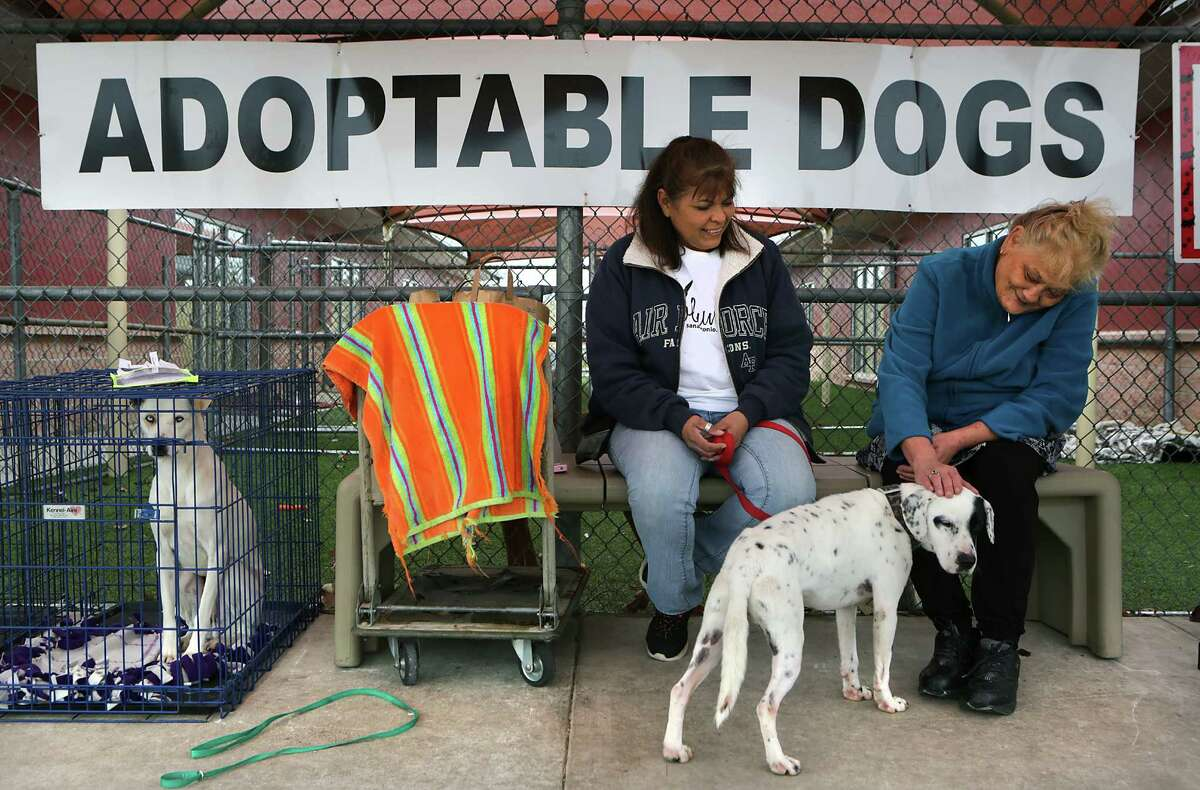 Patricia Arredondo, left, who has fostered dogs for 3 years, shows Pepe to Cynthia Flores who is a potential adopter, at Animal Care Services on Wednesday, Jan. 20, 2016. The animal shelter announced they have reached a 90 percent live release rate for all animals brought to the shelter during December.