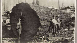 """In the early 1890s, about a third of Washington's population worked in logging camps, sawmills, shingle mills, and in factories making wooden doors and window sashes. Nearly 1.2 billion board feet of lumber and almost 1.9 billion shingles were shipped from the state in 1892. Huge trees still filled the coastal forests, and no one thought the supply would ever run out. This 1890s photo shows a giant fir log at the Huron Lumber Company in Bothell. The town got its start in 1886, when David Bothell started a lumber camp and shingle mill in the area."" -MOHAI. Photo courtesy MOHAI, Seattle Historical Society Collection, image number shs1039."