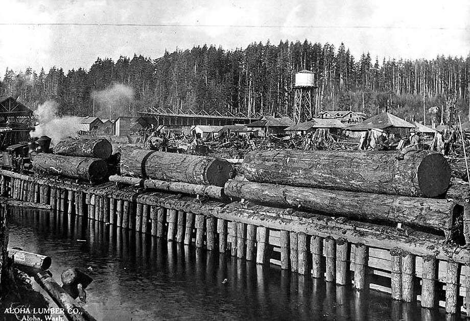 The Aloha Lumber Company, Aloha, Washington, circa 1916. Photo courtesy University of Washington Special Collections. Photo: Courtesy University Of Washington Special Collections
