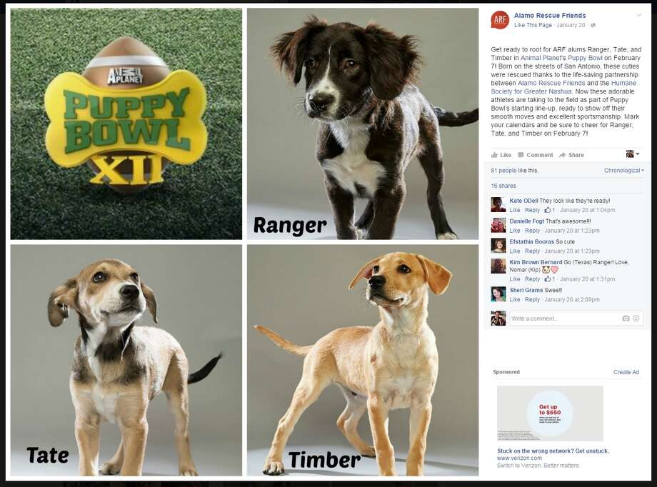 Say hello to Ranger, Tate and Timber, three rescue dogs from San Antonio taking part in Puppy Bowl XII on Animal Planet, Sunday, Feb. 7, at 2 p.m. The dogs come from Alamo Rescue Friends, which posted the news on its Facebook page. Photo: Screenshot / Screenshot