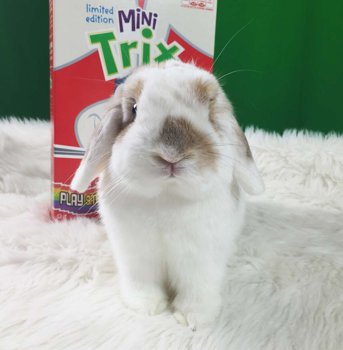 America's Next Top Bunny Trix Cereal put out a call for a new Trix Rabbit a couple of months ago, and this Houston bunny, Cinnabun, was the winner.
