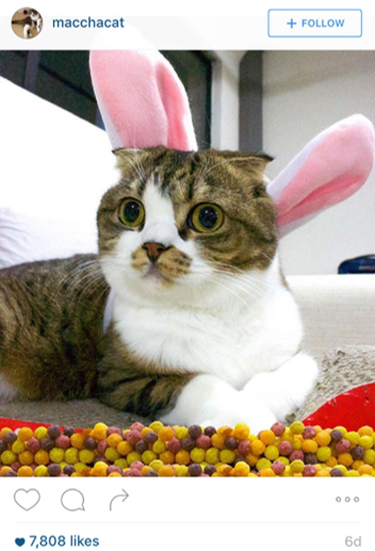 The cat's meow Another finalist posed for the competition to become the next Trix Rabbit.