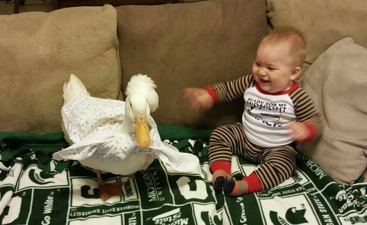 A Texas toddler and his duck best friend may not be birds of a feather, but they're still flocking together.