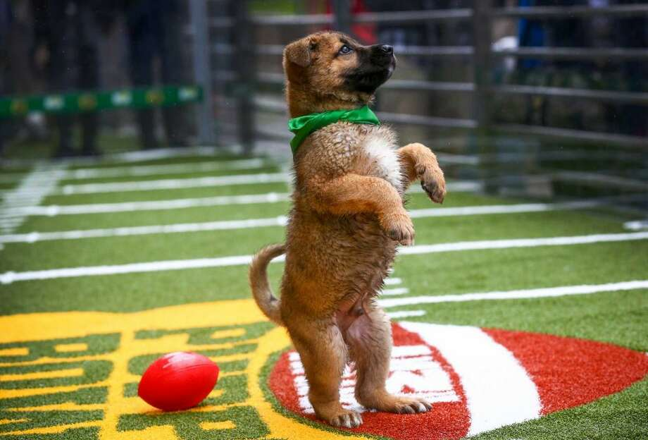Check the following slides for some of 2015's big Puppy Bowl moments.