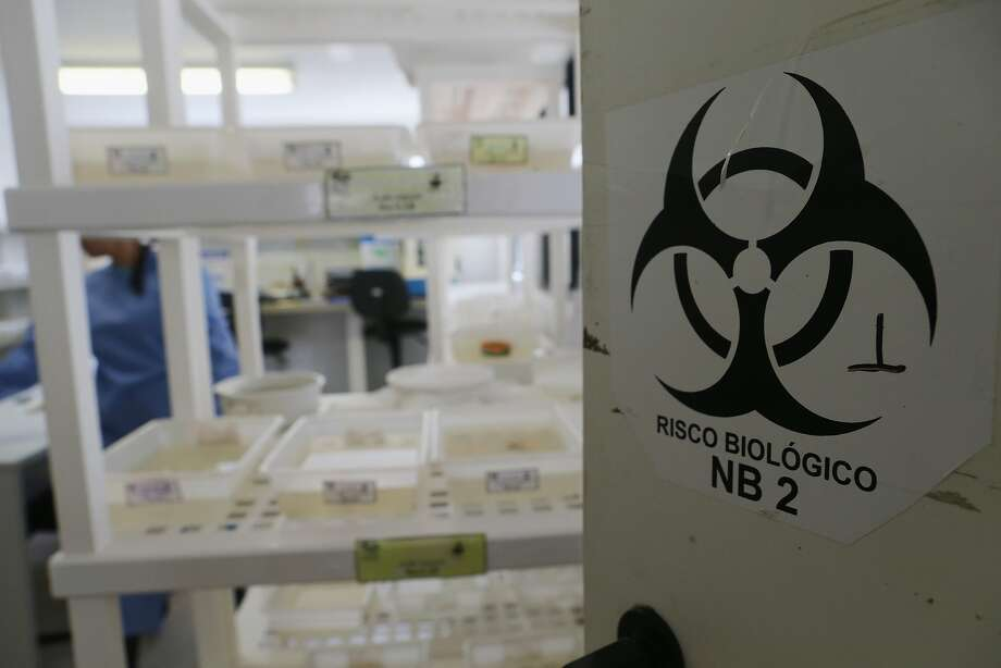 RECIFE, BRAZIL - JANUARY 26:  Aedes aegypti and other mosquitos are contained in a lab at the Fiocruz institute on January 26, 2016 in Recife, Pernambuco state, Brazil. The Aedes aegypti mosquito transmits the Zika virus and is being studied at the institute. In the last four months, authorities have recorded close to 4,000 cases in Brazil in which the mosquito-borne Zika virus may have led to microcephaly in infants. The ailment results in an abnormally small head in newborns and is associated with various disorders including decreased brain development. According to the World Health Organization (WHO), the Zika virus outbreak is likely to spread throughout nearly all the Americas. At least twelve cases in the United States have now been confirmed by the CDC.  (Photo by Mario Tama/Getty Images) Photo: Mario Tama, Getty Images