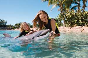 Dolphin dies at SeaWorld San Antonio, another being treated - Photo