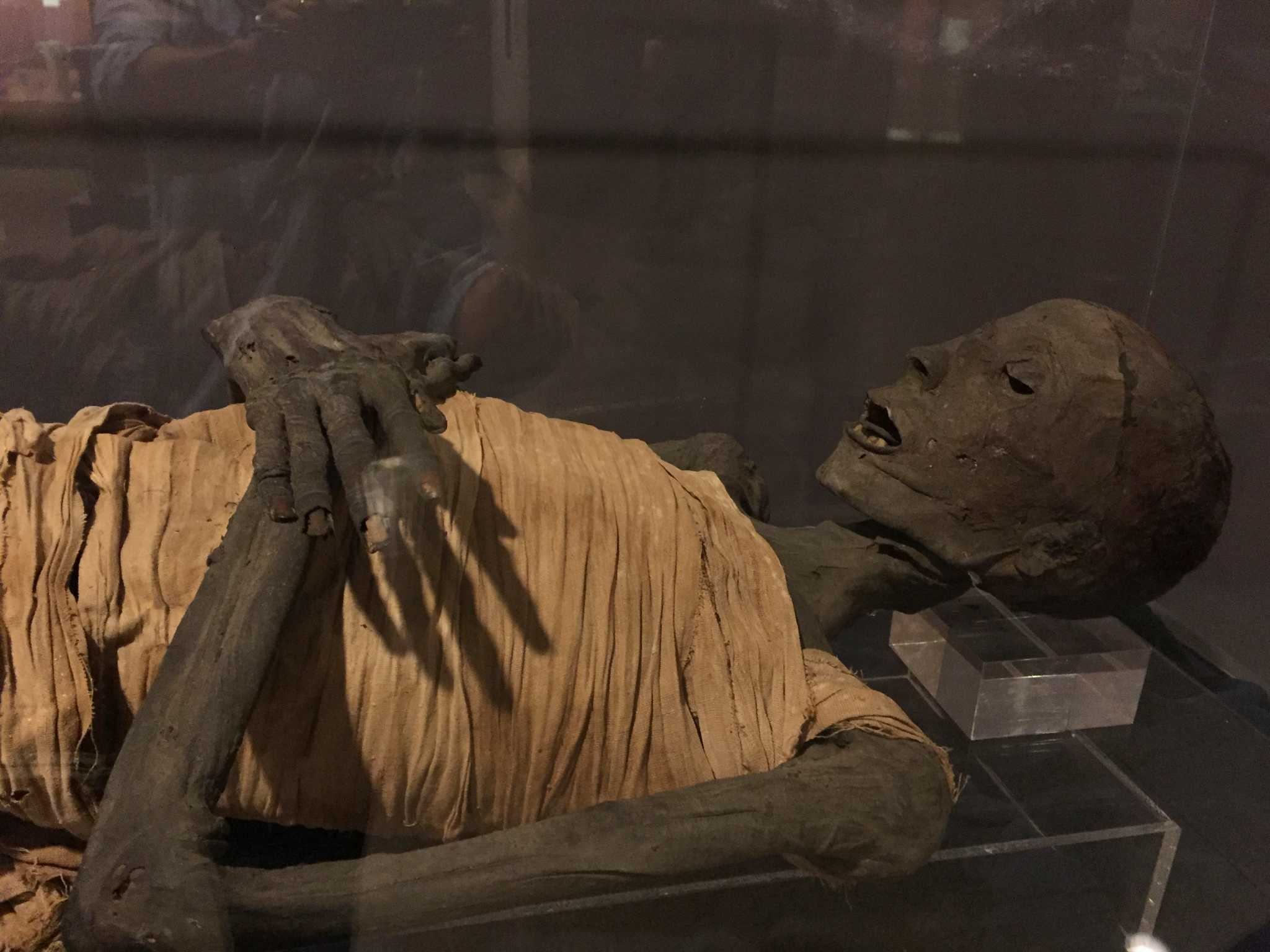 A Museum Of Wonder Mummy Approved San Antonio Express News