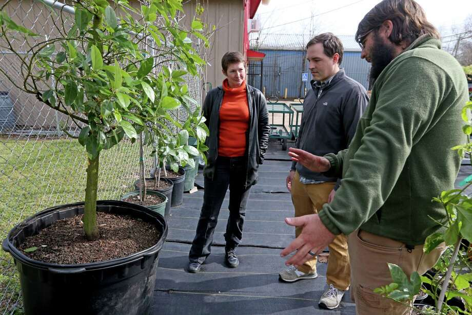 Customer Christine Bailey with business partners Clayton Garrett and Scott Snodgrass next to an avocado tree ready to produce fruit next year at Farmstead: Grow & Eat Wednesday, Jan. 27, 2016, in Houston, Texas. ( Gary Coronado / Houston Chronicle ) Photo: Gary Coronado, Staff / © 2015 Houston Chronicle
