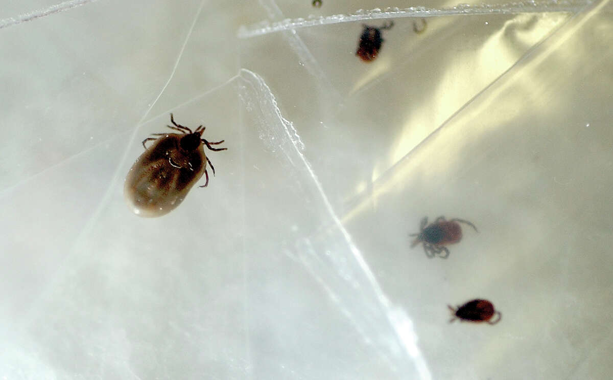 Worst states for Lyme Disease 11. Minnesota Incidence of Lyme disease: 16.4 (per 100,000 residents) Confirmed cases of Lyme Disease: 896 Percent of population that lives in rural areas: 26.7% Percent of adults that are physically active: 80.5%