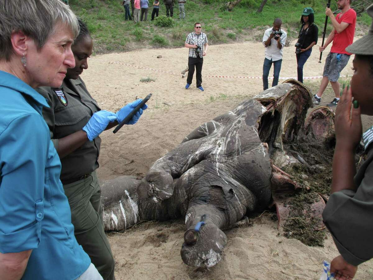 U.S. Secretary of the Interior Sally Jewell talks with investigators near the carcass of a poached rhino in Kruger National Park, South Africa's biggest wildlife reserve, Friday, Jan. 29, 2016. Jewell visited the park during an Africa tour in which she discussed ways to curb the illegal trade in wildlife, which has included record numbers of rhino killings as poachers supply a market for rhino horn.